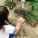 0~2歳児の菜園活動【モンテッソーリ教育を取り入れる】