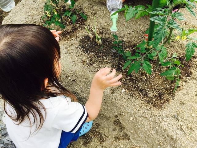菜園と子ども